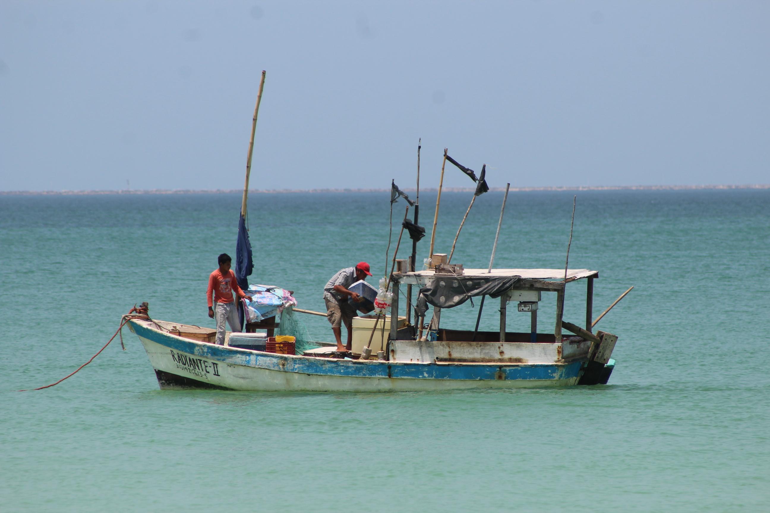 Muere segundo pepinero de mar en Yucatán