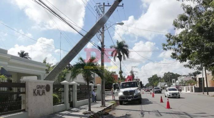 Cables de luz y TV evitan que palmera caiga por completo en calles de Itzimná