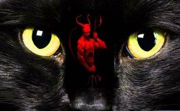 """Enigmas: la """"mala fama"""" de los gatos negros"""