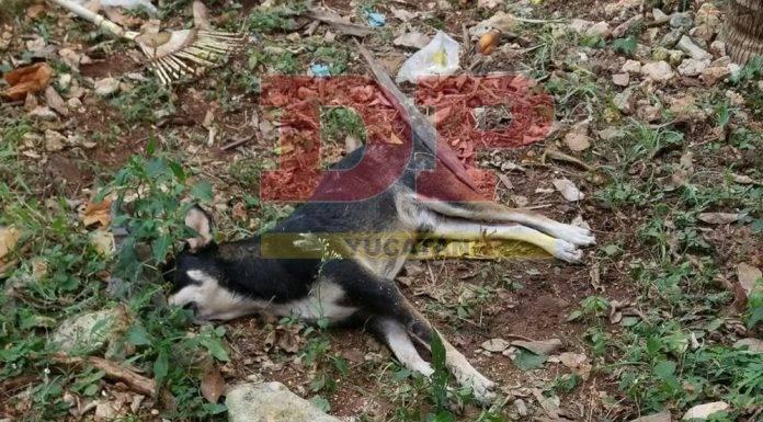 Envenenaron a dos perros para entrar a un predio a robar