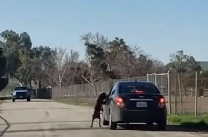Abandona a su perro en carretera y hasta lo patea (video)