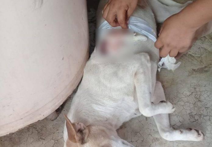 Vecinos malandros machetean a perro en Valladolid