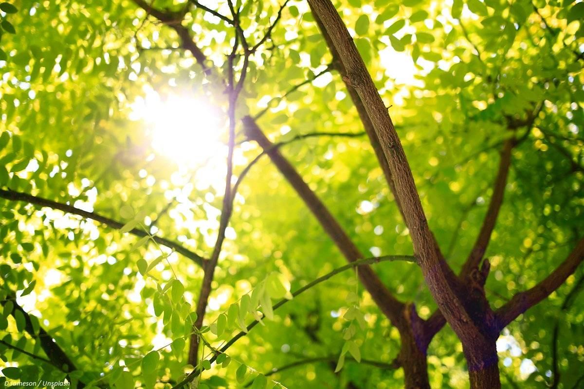 Siembra de árboles reduciría dos tercios de contaminación