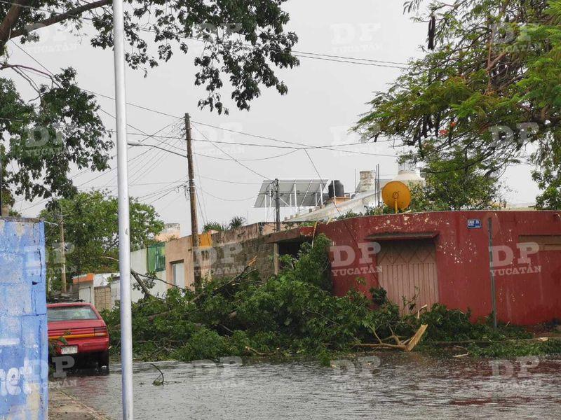 Caída de árbol en la calle 48 de la colonia Emiliano Zapata Oriente