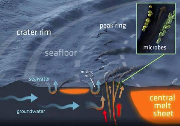 El antiguo ecosistema subterráneo fue revelado en un núcleo de roca extraído del anillo de pico del cráter de Chicxulub. (Foto: Astrobiology)